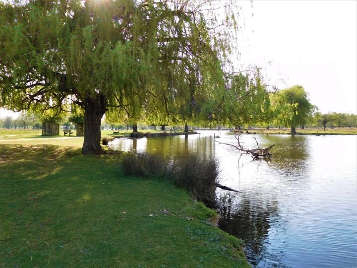 Bushy Park 1