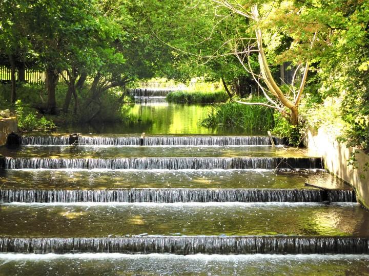 Bushy Park 14