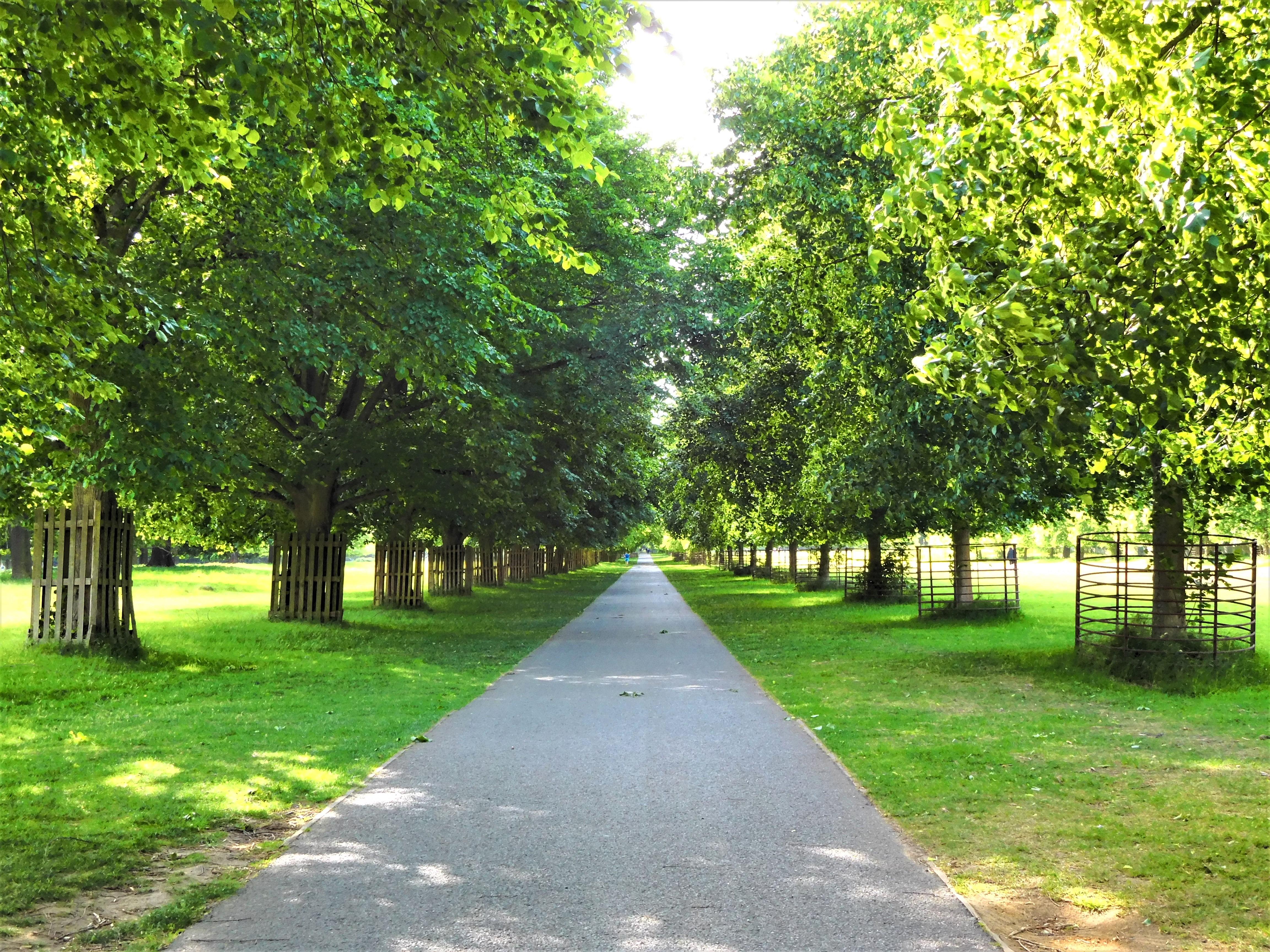 Bushy Park 18